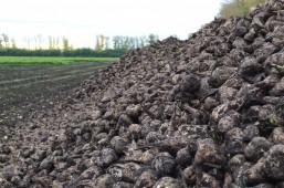 План по химпрополке сахарной свеклы в Белоруссии перевыполнен более чем в два раза