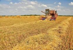 Ход уборочных работ в Белоруссии постепенно продвигается